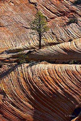 Photograph - Tree In Flowing Rock by Christopher Holmes