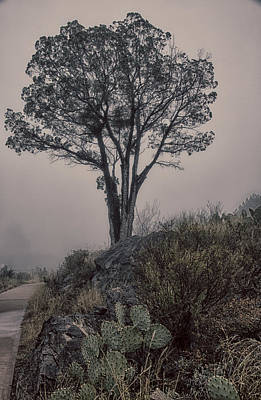 Photograph - Tree In Fog by Kathy Adams Clark