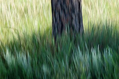 Photograph - Tree In Grass by Deborah Hughes