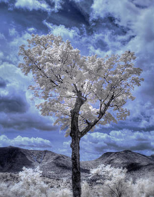 Valentines Day - Tree in Infrared - White Mountains by Joann Vitali