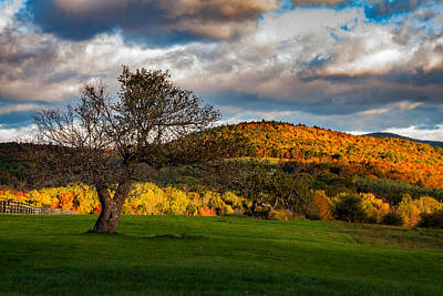 Photograph - Tree In Maine Pasture One by Jeff Folger