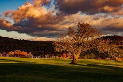 Photograph - Tree In Maine Pasture Two by Jeff Folger