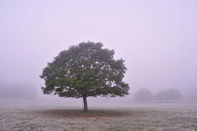 Photograph - Tree In Morning Fog  by Marek Stepan