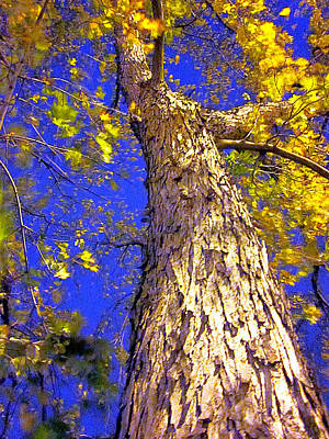Photograph - Tree In Motion by Guy Ricketts