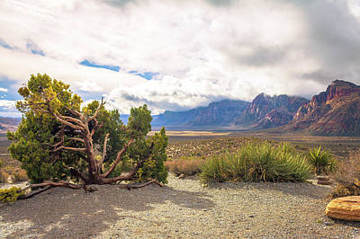 Tree In Red Rock Canyon Art Print