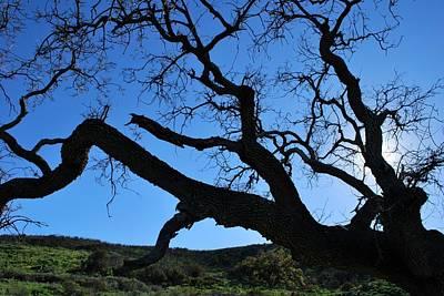 Tree In Rural Hills - Silhouette View Art Print