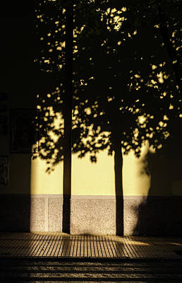 Photograph - Tree In Shadows by Andrea Mazzocchetti