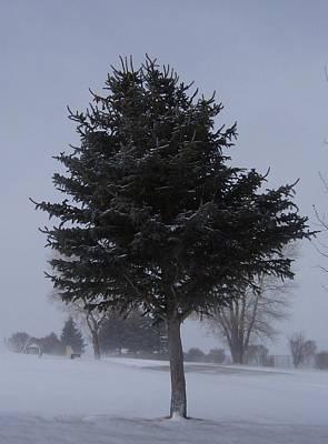 Tree In Snowstrom Art Print by Susan Pedrini