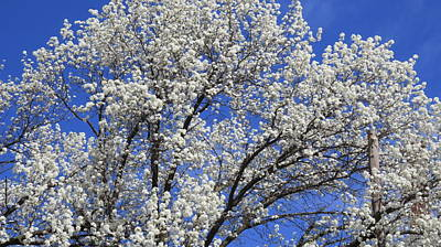 Graduation Sayings - Tree in Spring by Roger Epps