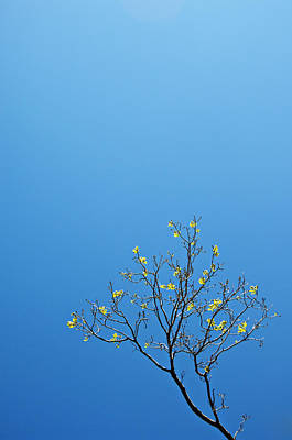 Photograph - Tree In Spring by Scott Sawyer
