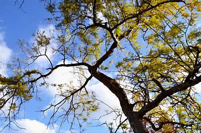 Tree In Spring Time Over Blue Sunny Sky Art Print