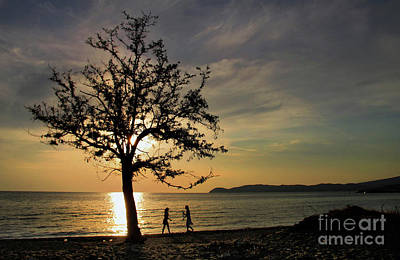 Photograph - Tree In Sunset by Daliana Pacuraru