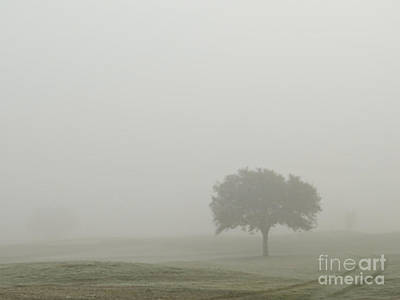 Photograph - Tree In The Fog by Ella Kaye Dickey