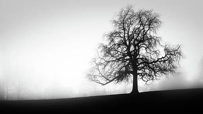 Photograph - Tree In The Fog by James Billings