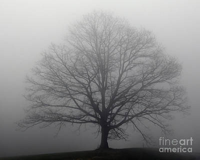 Photograph - Tree In The Fog by Kerri Farley