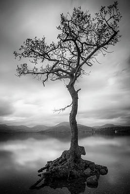 Photograph - Tree In The Loch by Alex Saunders