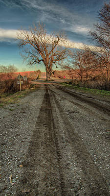 Photograph - Tree In The Middle Of The Road 6 by Christopher L Nelson