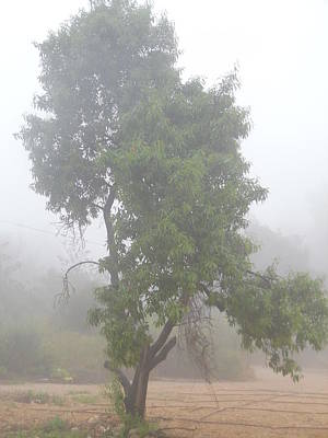 Photograph - Tree In The Mist by Esther Newman-Cohen