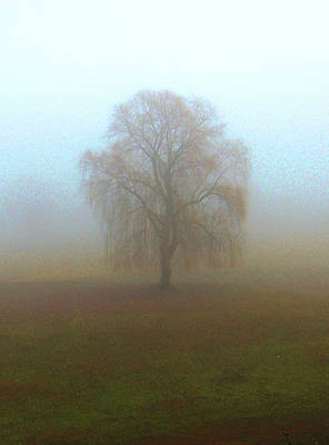 Photograph - Tree In The Mist In Bradford Vermont by Nancy Griswold