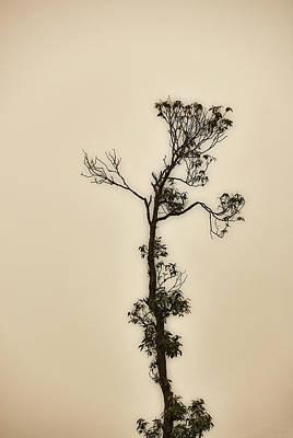 Photograph - Tree In The Mist by Rajiv Chopra