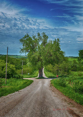 Photograph - Tree In The Road by Edward Peterson
