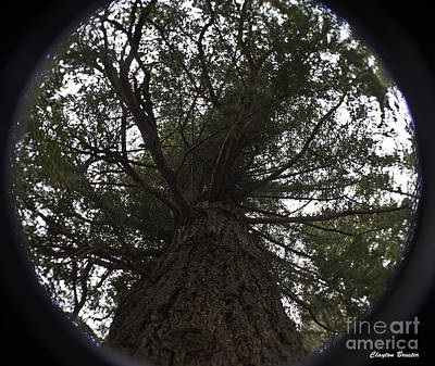 Photograph - Tree In The Round by Clayton Bruster
