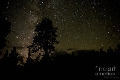 Photograph - Tree In The Stars by David Arment