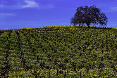 Tree In The Vineyards Art Print