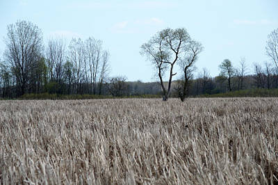 Lucille Ball - Tree in the Wetland by Linda Kerkau