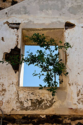 Photograph - Tree In The Window by Roger Mullenhour