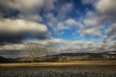 Photograph - Tree In The Winter Valley by Mike Eingle