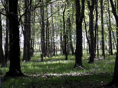 Tree In The Woods Original