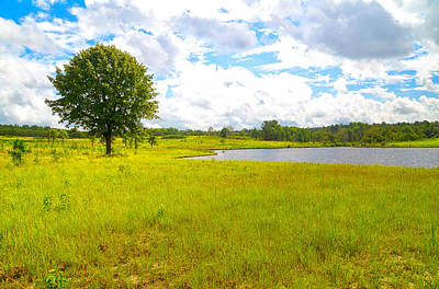 Photograph - Tree In The Yellow Grass by Linda Brown
