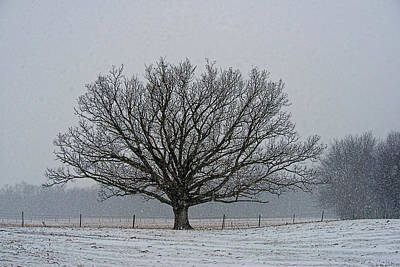 Photograph - Tree In Winter by David Arment