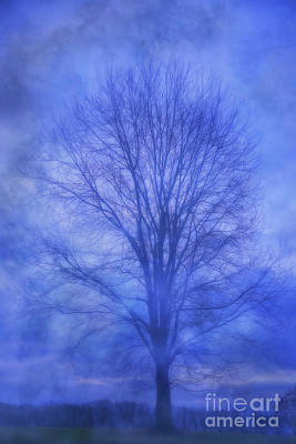 Digital Art - Tree In Winter Fog by Randy Steele