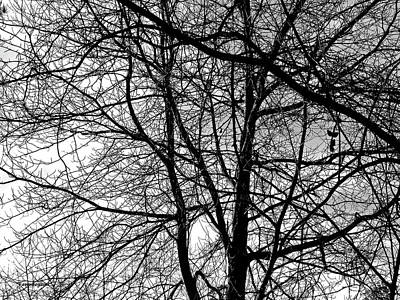 Photograph - Tree In Winter by Harold Zimmer