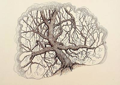 Drawing - Tree In Winter II by Kerry Beverly
