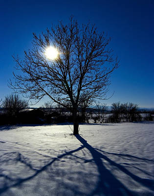 Tree Into Sun On A Winter Snowy Afternoon Art Print