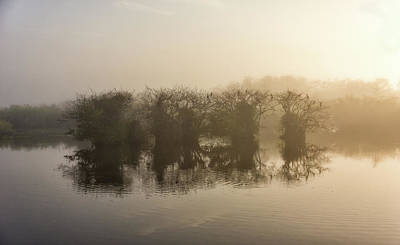 Photograph - Tree Islands by Louise Lindsay