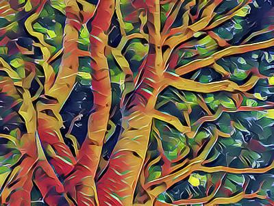 Photograph - Tree by Jonathan Nguyen