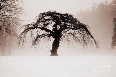 Tree Art Print by Julie Hodgkins