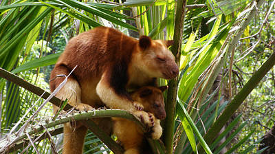 Photograph - Tree Kangaroo 1 by Gary Crockett