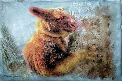 Photograph - Tree Kangaroo by Wallaroo Images