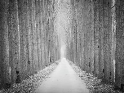 Photograph - Tree Lane by Wim Lanclus