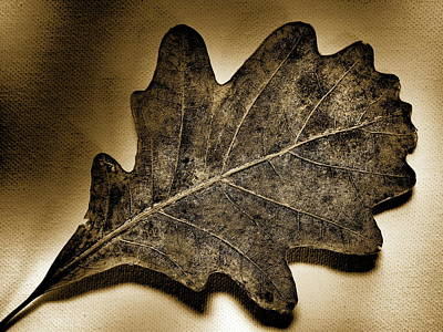Photograph - Tree Leaf -sepia by Tom Druin