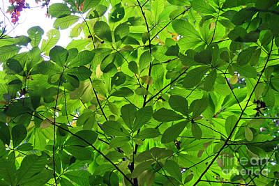 Photograph - Tree Leaves by Karen Adams
