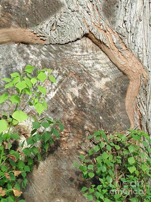 Photograph - Tree Legs by Frances  Ann Hattier