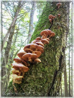 Photograph - Tree Life.... by Paul Vitko