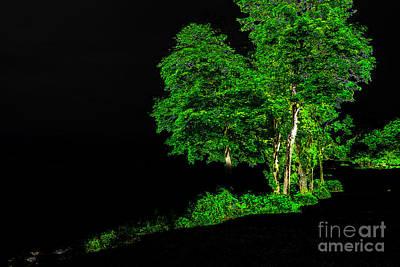 Photograph - Tree Light by William Norton