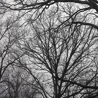 Photograph - Tree Limbs Silhouette by Bellesouth Studio